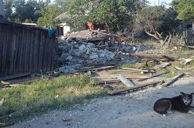 На Донбассе раненые коты и собаки умирают в подвалах