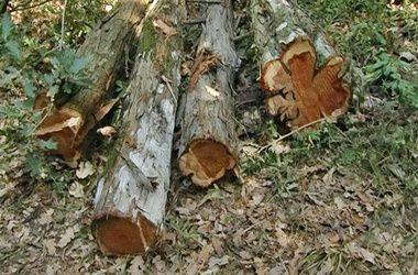 В Полтавской области упавшее дерево раздавило 3-летнего ребенка