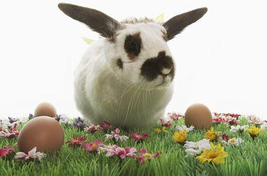 Топ 10 самых оригинальных пасхальных кроликов