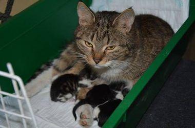 Животные на войне: волонтеры спасли беременных кошек, а бойцы привозили собак под обстрелами