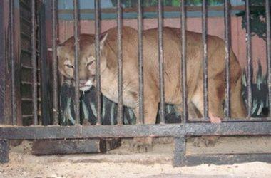 В Украине запретили выставки диких животных и передвижные зоопарки