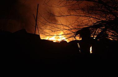 65 собак из 70 погибших при пожаре в приюте задохнулись угарным газом – МВД
