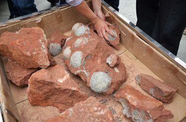 В Китае рабочие случайно обнаружили 47 яиц динозавра