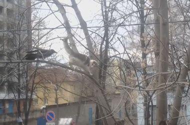 Новый хит YouTube: ворона затроллила кота на ветке дерева