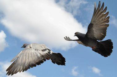Ученые рассказали, почему птицы не врезаются в здания и деревья
