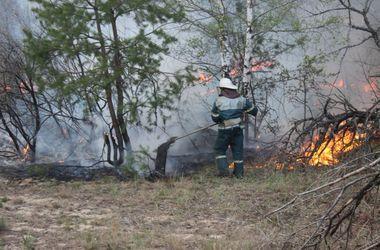 Все о пожаре возле ЧАЭС: хроника событий