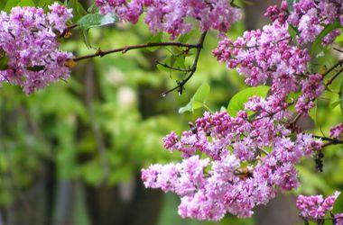 Ученые назвали причину майских дождей
