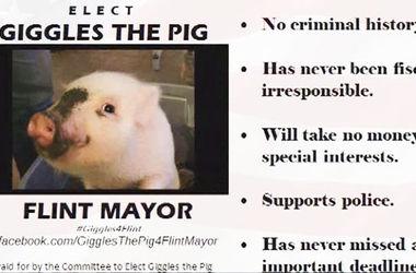 В США кандидатом в мэры зарегистрировали свинью
