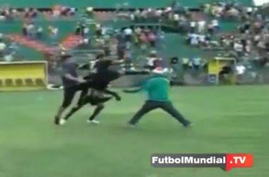 В Гондурасе футболист ударил фаната ногой по голове