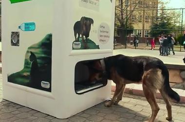 Автомат для кормления бездомных животных появился в Стамбуле