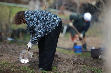 Выживание на Донбассе: огороды разбивают под домами и на балконах