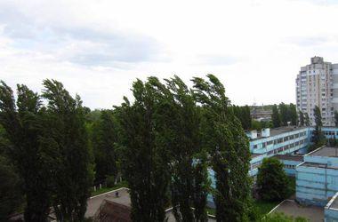 После гибели пятилетнего ребенка киевляне массово жалуются коммунальщикам на старые деревья