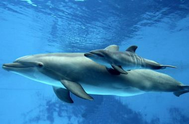 В Одесском дельфинарии родился дельфиненок