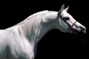 Обезумевшая лошадь покалечила пятерых детей и одно взрослого на дне рождения в Германии