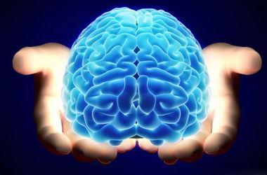 Ученые нашли спидометр в мозге человека