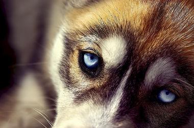 В столице догхантеры отравили семь собак