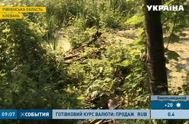 В Ровенской области бобры уничтожают тоннель любви
