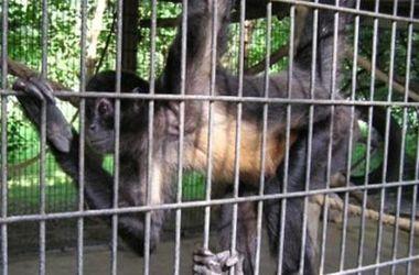 Из-за пожара на нефтебазе животных в Киевском зоопарке спрячут в закрытые вольеры