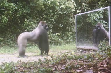 Видеохит: Реакция диких зверей на зеркало
