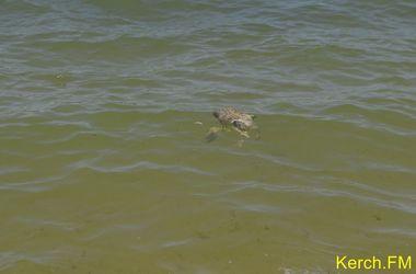 В Крыму мертвые птицы плавают в море и гниют на берегу
