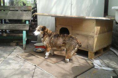 Собачке Лее нужна помощь: изверги отрубили ей лапы и хвост