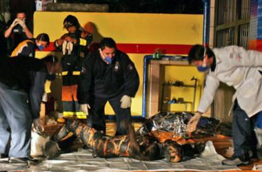фото тел крушения а 321 в египте