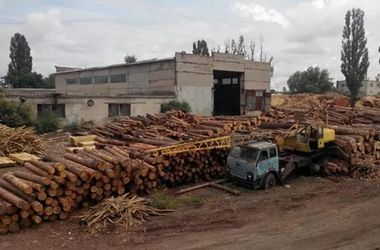 В Донецкой области чиновники украли леса на миллионы гривен