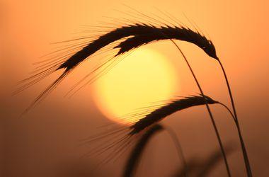 Как перепады погоды в Украине скажутся на урожае и ценах