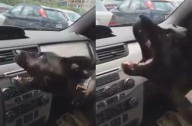 Видеохит: щенок впервые столкнулся с автомобильным кондиционером