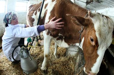 Рада предварительно повысила закупочные цены на молоко