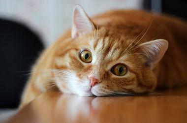Власти Австралии намерены убить два миллиона котов