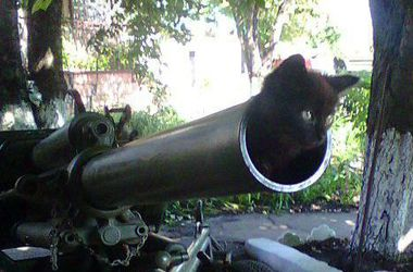 Боевики заряжают пушки котами