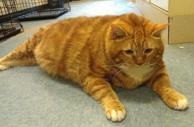 Кот по кличке Тощий похудел на 10 кг за три года изоражения