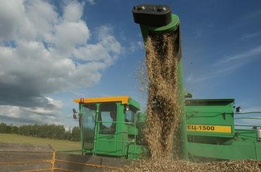 Во всем мире цены на зерно падают, а в Украине - растут