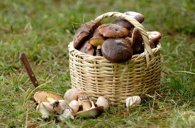 В Харьковской области появились первые жертвы грибов