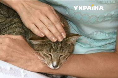 В Черкассах можно выпить кофе и успокоить нервы в кошачьей компании