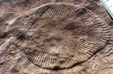 Ученые нашли следы древнейшего секса на Земле