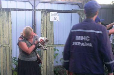 Под Киевом пожарные спасли собаку и котенка