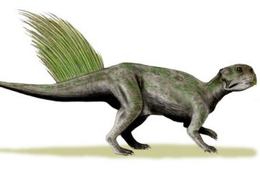 В Китае под лестницей дома нашли скелет и 213 яиц динозавра