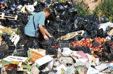 """""""Горят костры из камамбера"""": как в сети высмеяли уничтожение продуктов в России"""