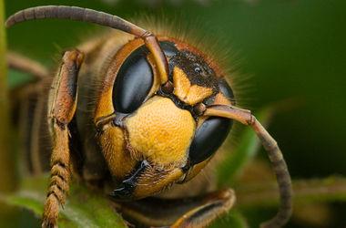 В Карпатах женщина скончалась от укуса осы