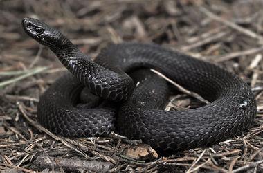 Змеи атакуют: во Львовской области за выходные от укусов пострадали три человека