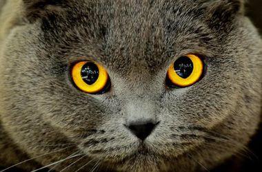 Ученые выяснили, почему у кошек вертикальные зрачки