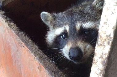 Днепропетровскому зоопарку дали 200 тыс. грн