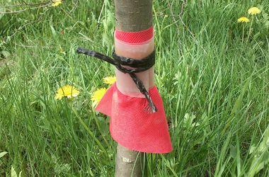 <p><span>Воронка-зонт. Защищает от вредных обитателей плодового дерева и от непрошеных голодных гостей.</span></p>
