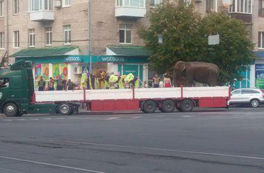 """Жителей Винницы возмутило """"издевательство"""" над слоном"""