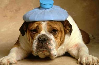 В Запорожских приютах собаки изнывают от жары