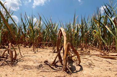 Над Донбассом нависла угроза голода - Павленко