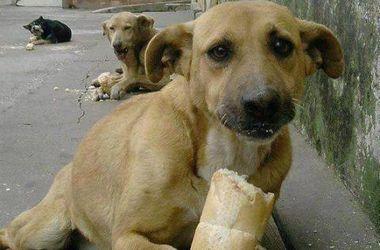 В Черкасской области бизнесмен расстрелял собак зарядами с ядом