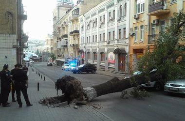 В центре Киева остановились троллейбусы: на дорогу рухнул огромный каштан